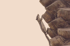 Drzewko palmowe tekstury korowaty tło Naturalny wzór Zdjęcie Stock