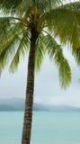 drzewko palmowe tropikalny Fotografia Stock