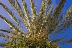 Drzewko palmowe w świetle słonecznym fotografia royalty free