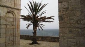 Drzewko palmowe w burzy obrazy stock