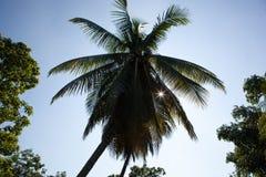 Drzewko palmowe w Kuba Fotografia Royalty Free