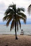 Drzewko palmowe w Kuba Obraz Royalty Free