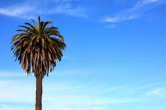 Drzewko palmowe w niebie Fotografia Stock