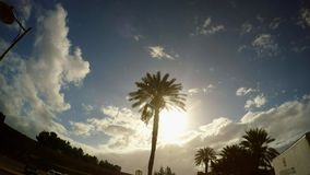 Drzewko palmowe w niedozwolonym greckim miasteczku Varosha zbiory