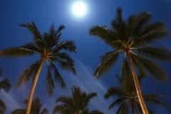 Drzewko palmowe w nocy głęboko Tajlandia Koh Samui wyspa Zdjęcia Royalty Free