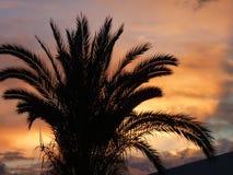 Drzewko palmowe w pięknym romantycznym zmierzchu fotografia stock