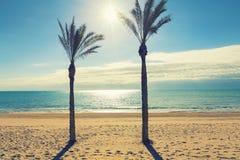 Drzewko palmowe w pogodnej plaży Alicante Hiszpania Obrazy Royalty Free