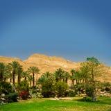 Drzewko palmowe w pustyni z piasek diunami zdjęcia stock