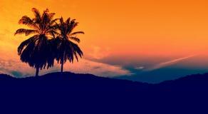 Drzewko palmowe w wieczór niebie obraz royalty free