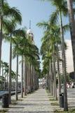 Drzewko Palmowe w Wiktoria schronieniu obraz stock