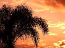 Drzewko palmowe w zmierzchu Zdjęcia Royalty Free