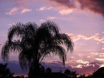 Drzewko palmowe w zmierzchu Obrazy Royalty Free
