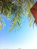 Drzewko palmowe widok zdjęcia stock