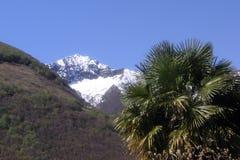 Drzewko palmowe z śniegiem nakrywał górę w tle Zdjęcie Stock