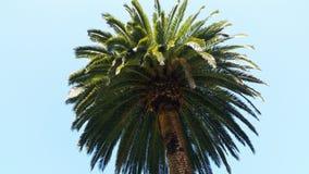 Drzewko palmowe z niebieskiego nieba tłem Obrazy Royalty Free