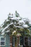Drzewko palmowe zakrywający w śniegu Obraz Royalty Free