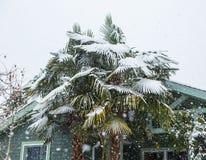 Drzewko palmowe zakrywający w lodzie i śniegu Obraz Royalty Free