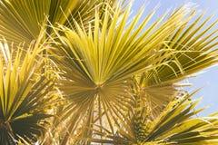 Drzewko Palmowe zmierzchu tło przeciw błękitny palmowemu niebu Zdjęcia Royalty Free