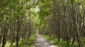 Drzewna ścieżka Fotografia Royalty Free