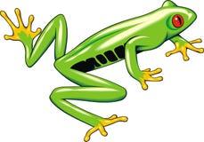 Drzewna żaba Obraz Royalty Free