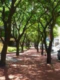 Drzewna aleja Fotografia Royalty Free
