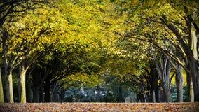 Drzewna aleja Zdjęcia Royalty Free