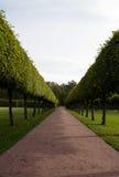 Drzewna aleja Fotografia Stock