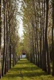 Drzewna aleja z yellowing liśćmi w późnym lecie Obrazy Royalty Free