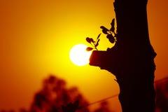 Drzewna żarówka Obraz Royalty Free