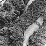 Drzewna barkentyna Fotografia Stock