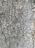 Drzewna barkentyna Zdjęcie Stock