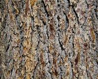 drzewna barkentyna Obrazy Royalty Free