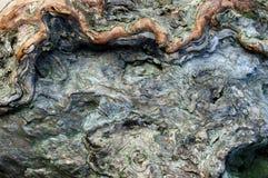 Drzewna barkentyna Obrazy Stock