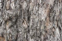 Drzewna barkentyna Zdjęcie Royalty Free