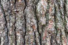 Drzewna barkentyna 6 Fotografia Royalty Free