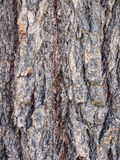 Drzewna barkentyna close-up-5022226 Fotografia Stock