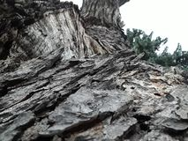 Drzewna barkentyna na zamkniętą inspekcję obrazy stock