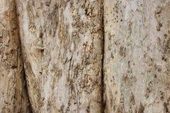 Drzewna barkentyna stosowna dla tło wizerunku tło szczegółów tekstury okno stary drewniane obrazy royalty free