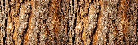 Drzewna barkentyna w g?r?, horyzontalny uk?ad fotografia royalty free