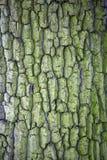 Drzewna barkentyna w liszaju naturalnym graficznym tle Obraz Royalty Free