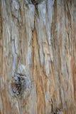 Drzewna barkentyna z brązów wzorami It& x27; s dostać round plamę zdjęcia royalty free