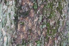 drzewna barkentyna z mech i liszajem fotografia stock