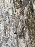 Drzewna barkentyna, zakończenie las jesieni Obraz Royalty Free