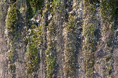 Drzewna barkentyna zakrywająca z mech Zdjęcie Royalty Free