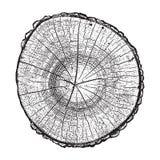 Drzewna bela, drewniana wzrostowych pierścionków grunge tekstury wektoru ilustracja ilustracja wektor