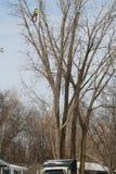 Drzewna drobiażdżarka Obraz Royalty Free
