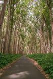 Drzewna droga Obrazy Stock