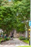 Drzewna droga w mieście Obrazy Royalty Free