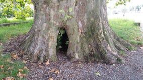 Drzewna dziura Obrazy Stock
