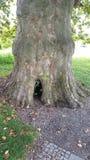 Drzewna dziura 2 Obraz Royalty Free